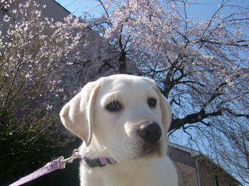 2009_0327花とパピー犬0007.jpg