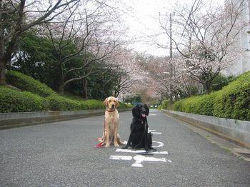 カレンちゃん1.jpg