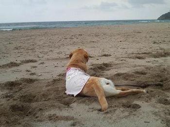 石見海浜公園.jpg