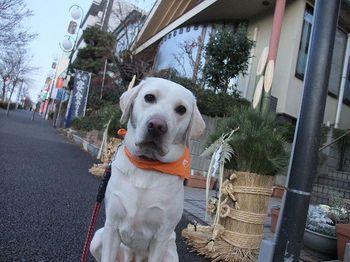 門松と桃ぴー.jpg