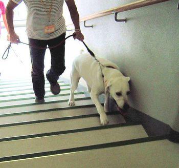 階段の昇降.jpg